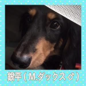 IMG_7779-0.jpg