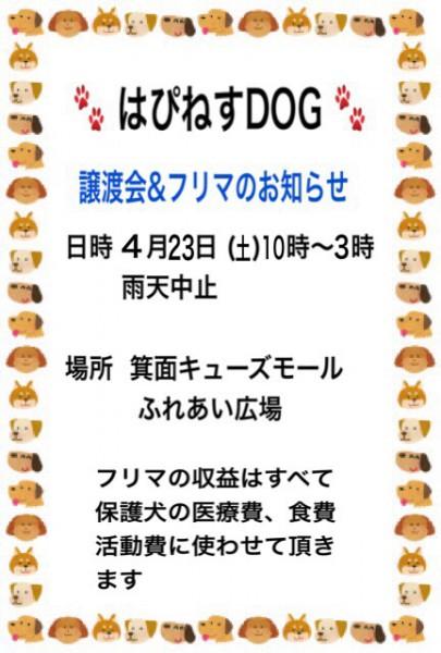 img_8303-3.jpg