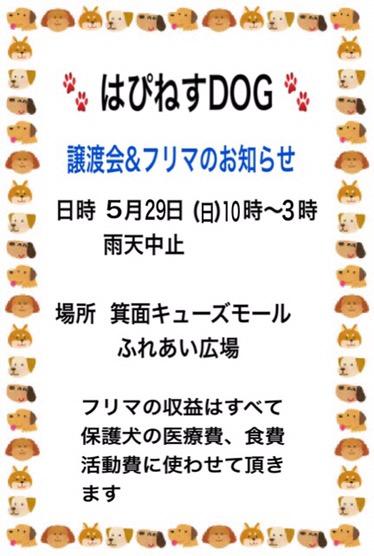 img_8935-5.jpg