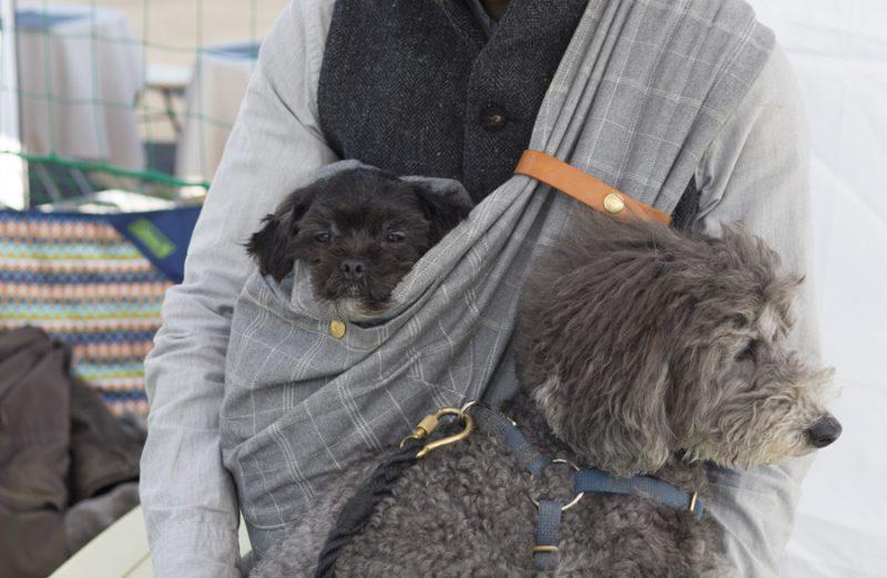 保護犬ツツを抱っこ散歩