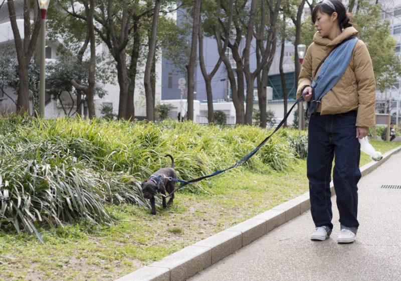 保護犬ツツとお散歩