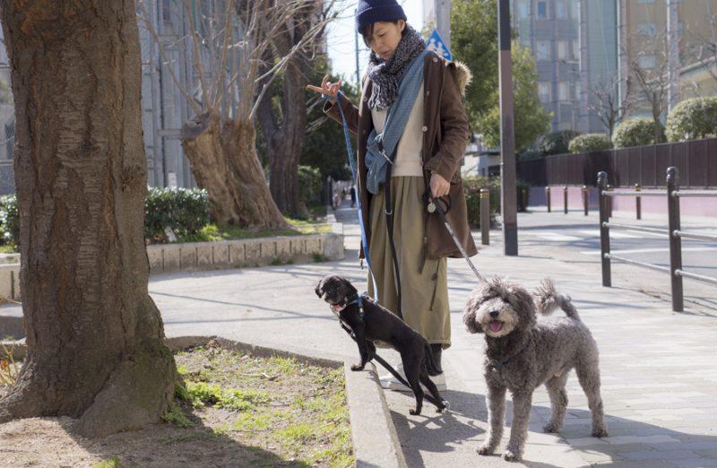 先住犬と保護犬ツツお散歩