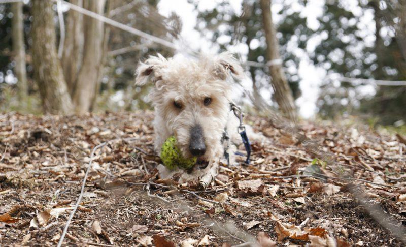 落ち葉の中でボールで遊ぶ