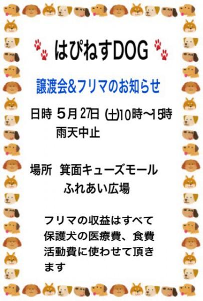 img_4277-5.jpg