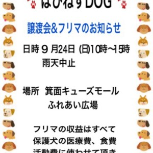 img_7650-1.jpg