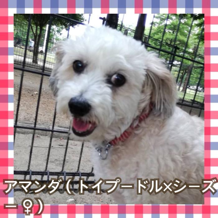http://happiness-dog.com/category/sotsugyo2017/amanda