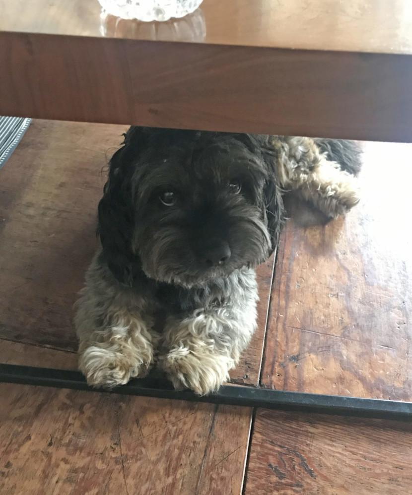 机の下のヌーフ